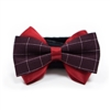 EasyBOW Gentleman 12